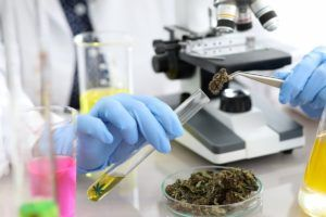 Proposed pesticide, heavy-metal testing rules in Washington state roil marijuana cultivators
